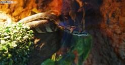 Węże (7)