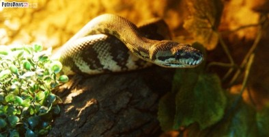 Węże (8)