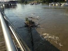 Rzeka Wisła (2)