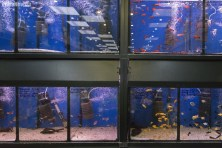 Sklep zoologiczny na Targowisku Rynex