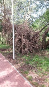 Drzewko 1