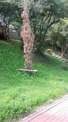 Drzewko 7