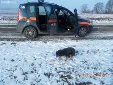 Fot. Straż Miejska w Płocku
