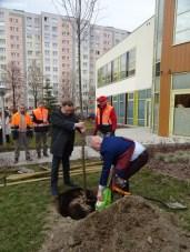 sadzenie drzew (1)