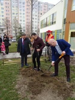sadzenie drzew (4)