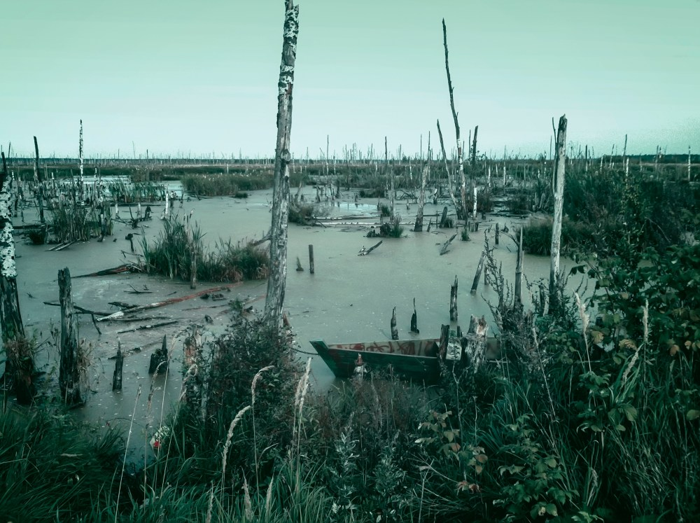 Mysterious scary empty uninhabited swamp with dead trees and old abandoned boats.