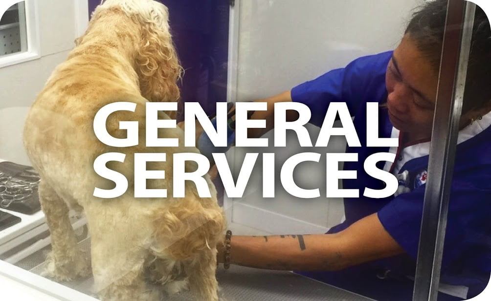 Learn more about Pets Central Services