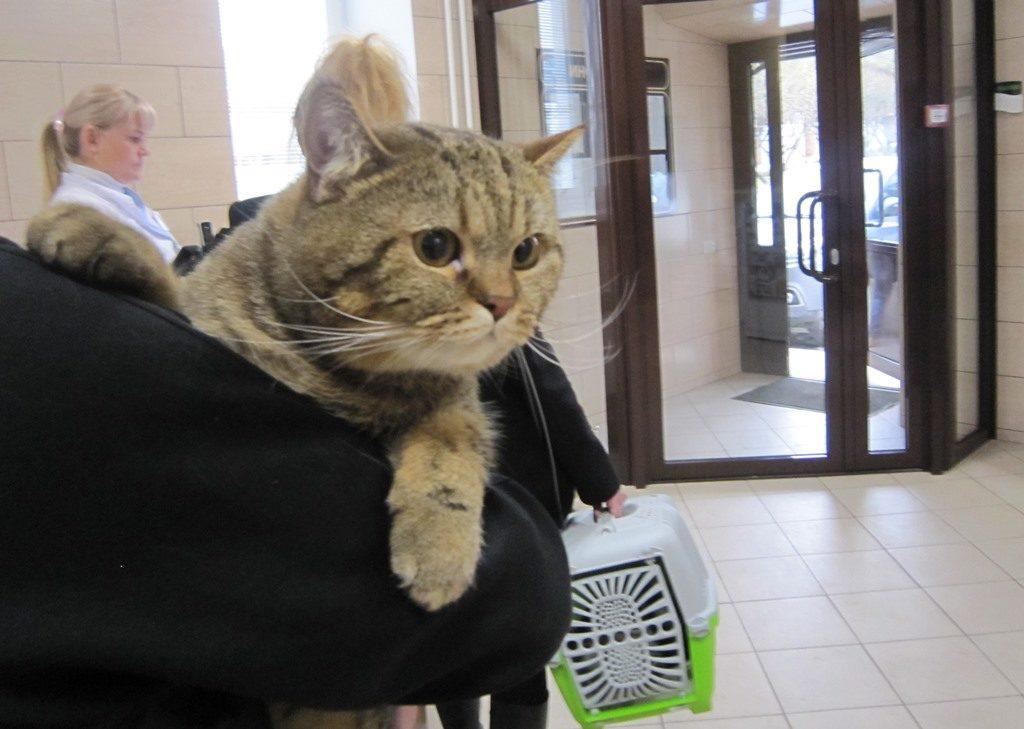 Как в поезде перевозить кошку