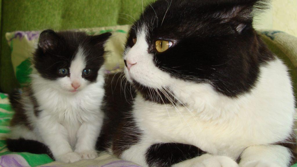 Kecepatan pengembangan tubuh kucing dan tubuh manusia memiliki sedikit kesamaan di antara mereka sendiri