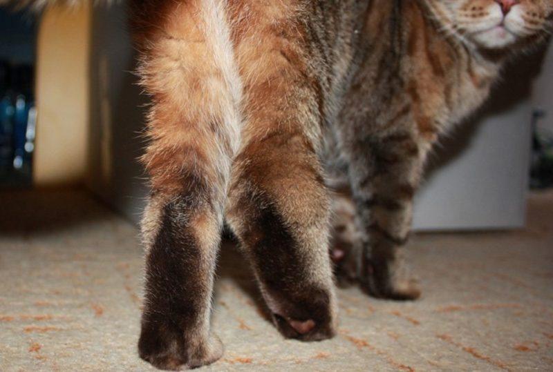 Jak vytvořit injekce cats.jpg