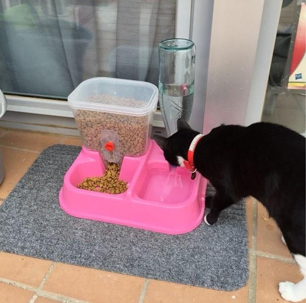 Автоматическая подача еды для кошек. Кормушка для кота из пластиковой бутылки. Как работает автоматическая кормушка для кошек