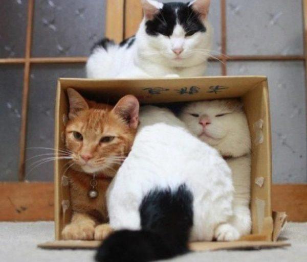 Pet skal have nok plads i hjemmet