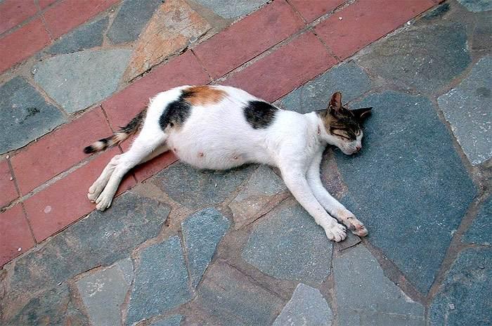 Выкидыш у кошки: причины и помощь. Если вдруг случился выкидыш у кошки, что делать хозяевам? Кошки случился выкидыш что делать