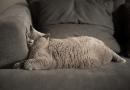 貓咪狗狗過重或太胖有關係嗎?又要如何判斷呢?