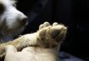 狗狗一直發抖怎麼辦?什麼時候該看醫生?八大原因一次告訴你!