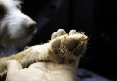 狗狗突然一直發抖該怎麼辦?是生病了嗎?八大原因一次告訴你!