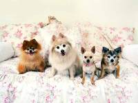 Types Of Dog Bed - How to Buy A Dog Bed, Bedding for Your Dog