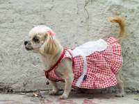 Dog Clothes Ideas - Dog Outdoor Wear - Coats, Vests and ...