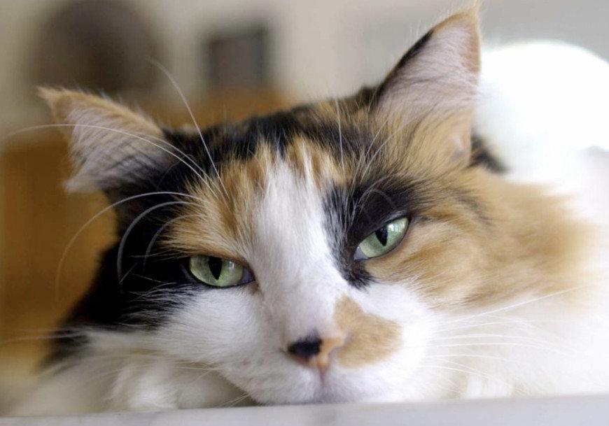 У кота холодный нос причины и нужно ли беспокоиться