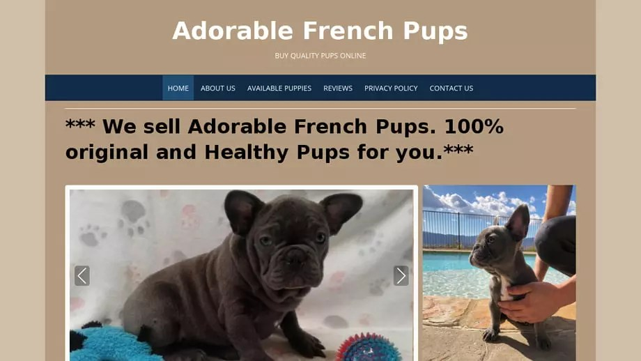 Adorablefrenchpups