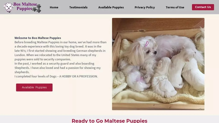 Bosmaltesepuppies