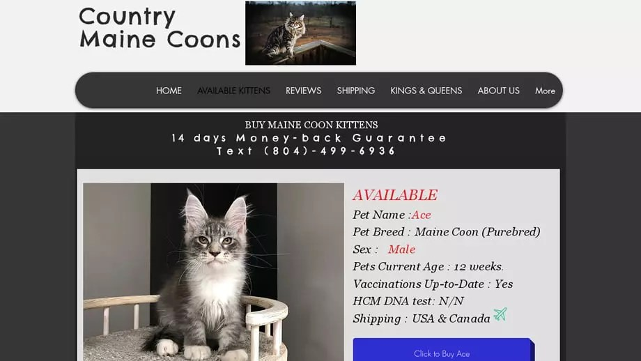 Countymainecoons