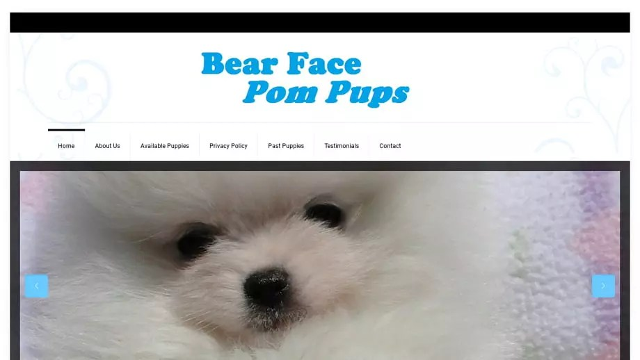 Bearfacepompups
