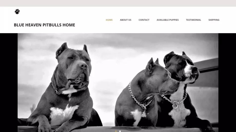 Blueheavenpitbullshome