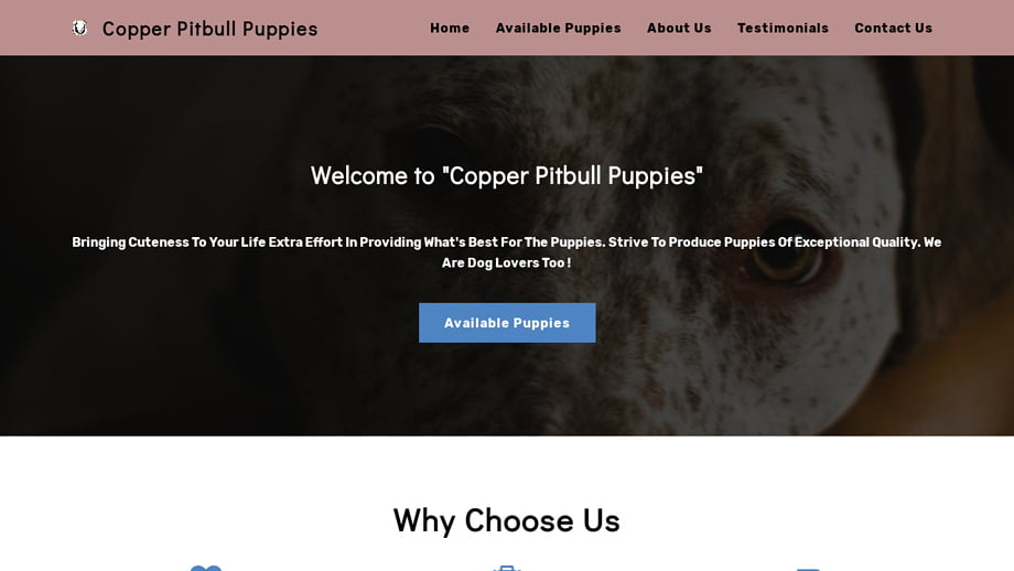 Copperpitbullpuppies