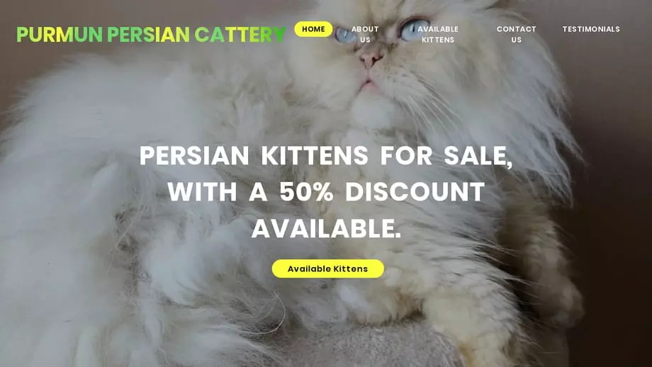 Purpersiankittens