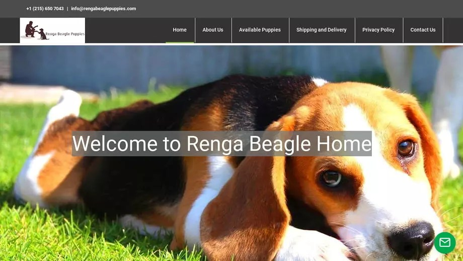 Rengabeaglepuppies