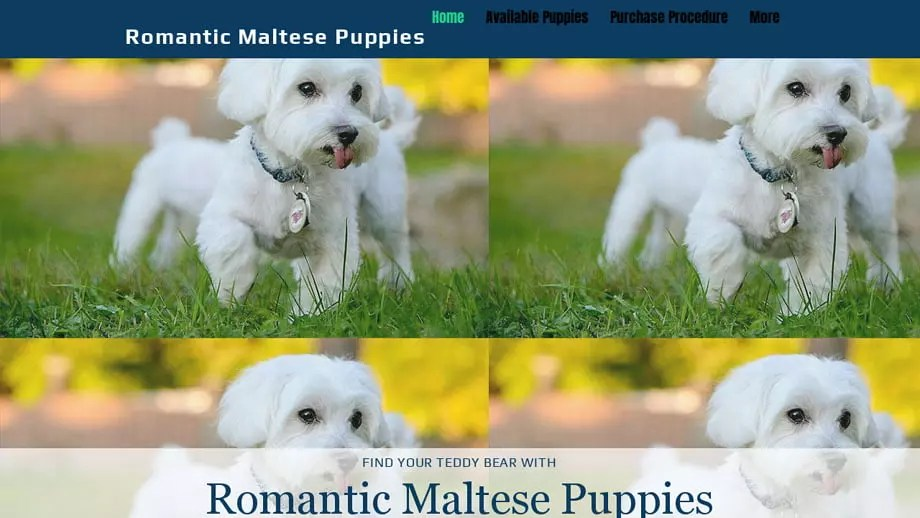 Romanticmaltese