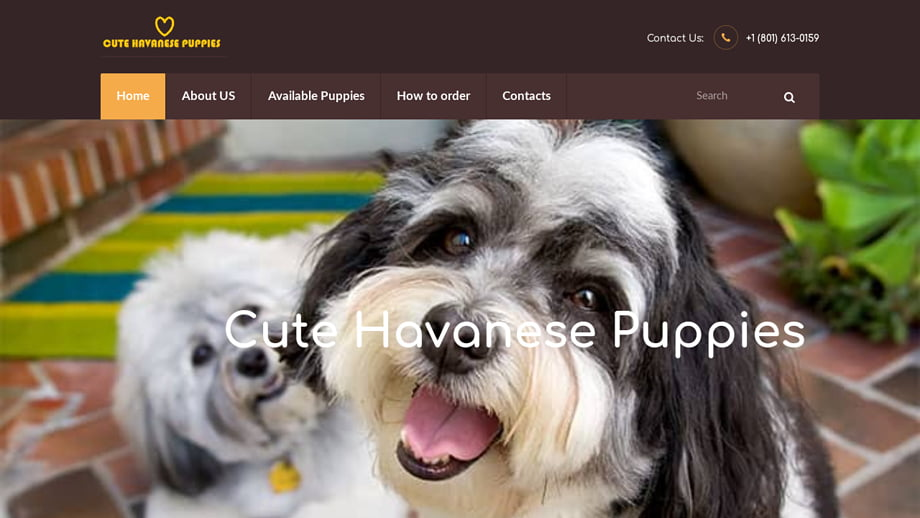 Cutehavanesepuppies
