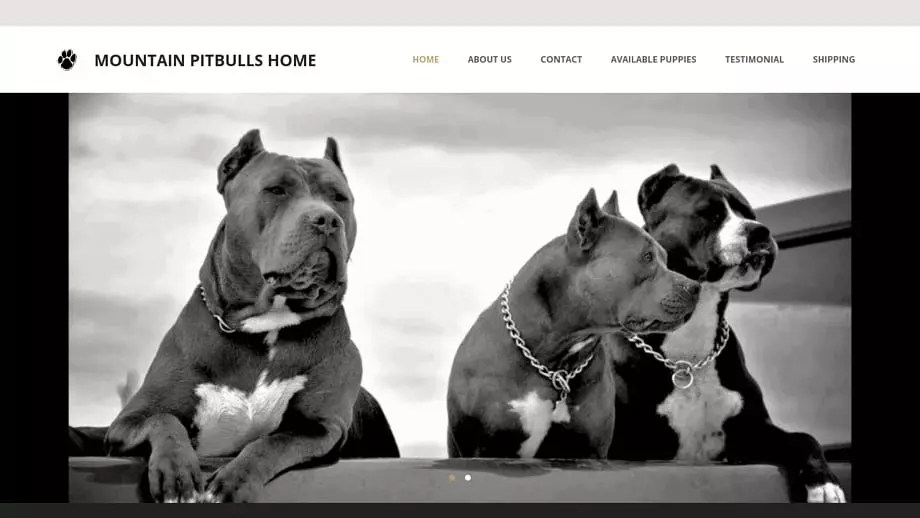 Mountainpitbullhome