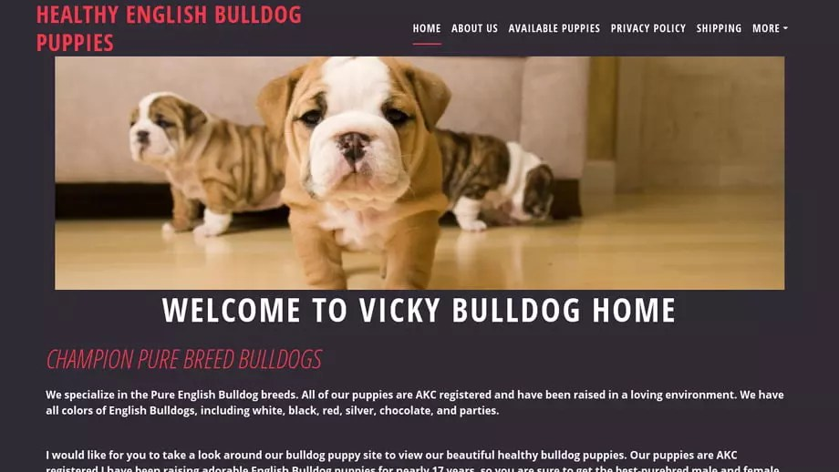 Vikyenglishbulldogpuppies