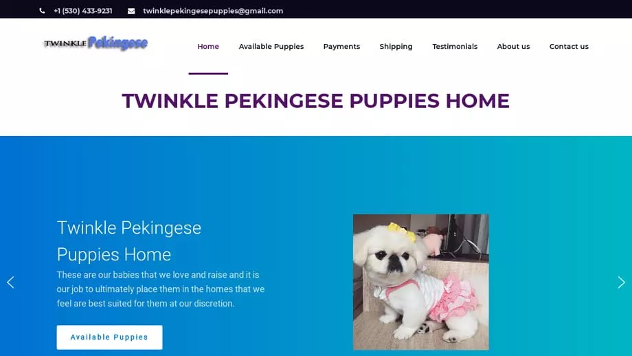 Twinklepekingesepuppies