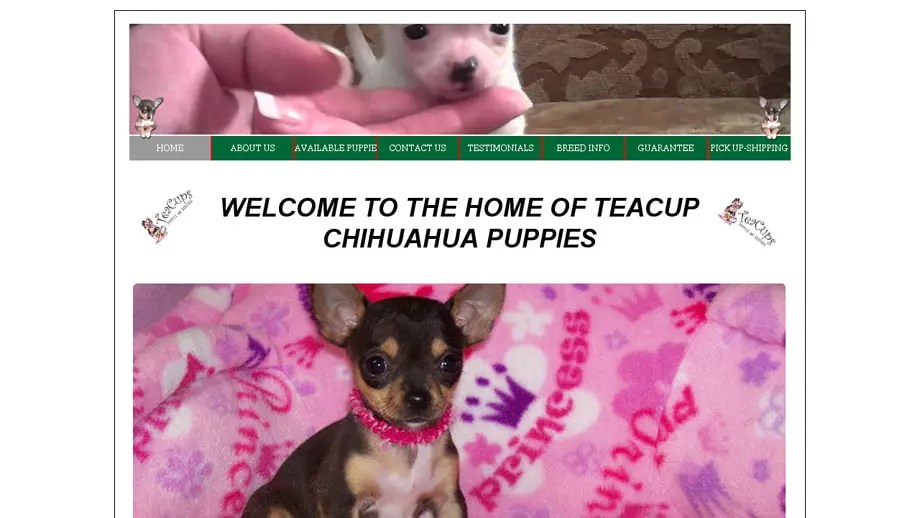 Blueskychihuahuapuppies