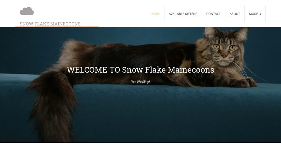 Sflakemainecoon