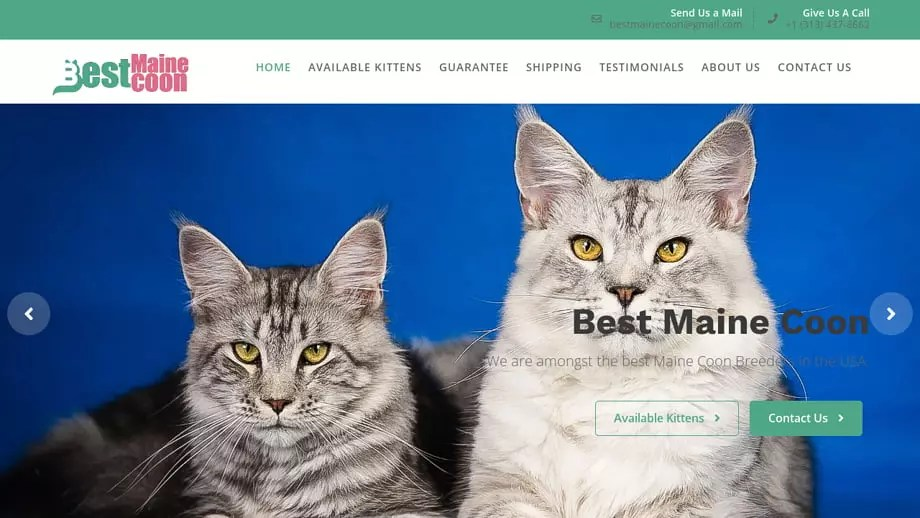 Puppy Scammer List Website Bestmainecoon Com Best Maine Coon Maine Coon Kittens For Sale