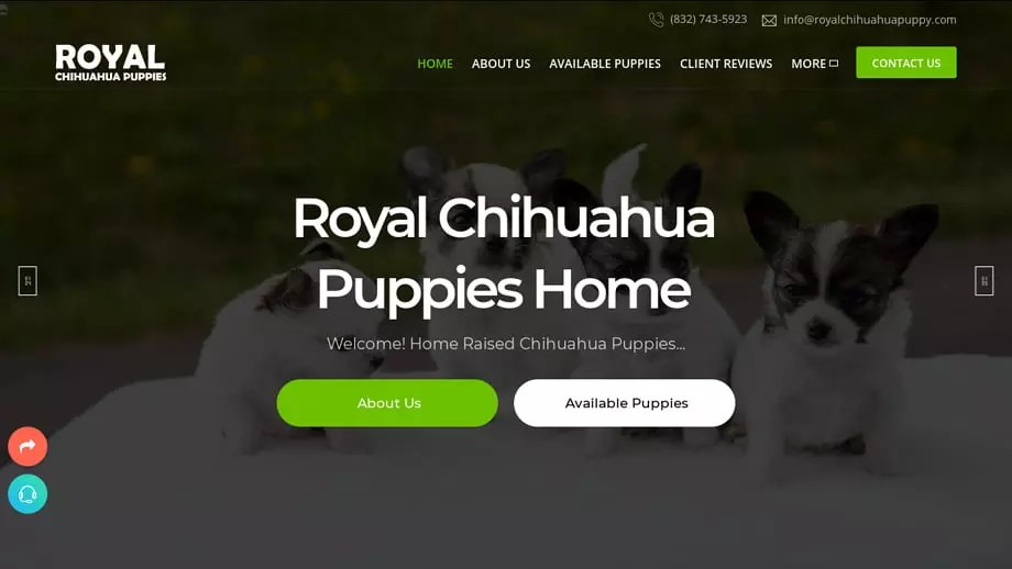 Royalchihuahuapuppy