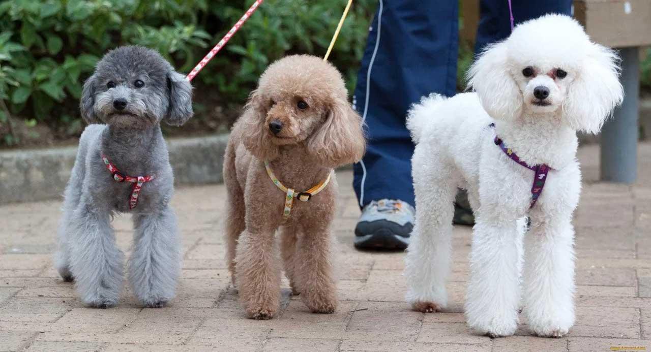 Top 10 Medium Sized Dog Breeds Pets Feed