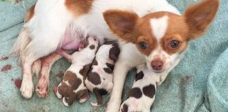 how to tell if your dog is in labor
