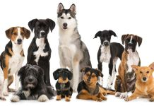 Which Dog Breed is Compatible With You