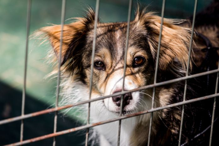 dog abandoned waiting for a home