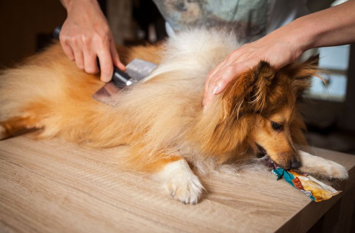 how to restrain a dog while grooming