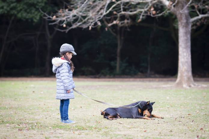 Little girl playing with Doberman
