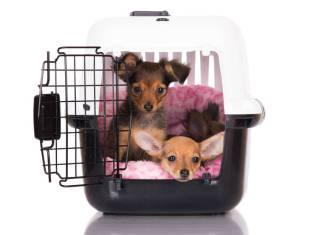 two dogs in one crate
