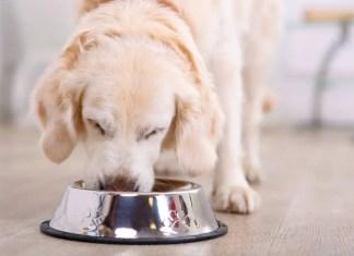 Where to Put Dog Bowls