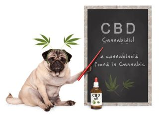 The Science Behind Giving CBD and Cannabis to Cats and Dogs