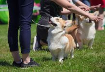 3 Must-See Dog Events For 2020